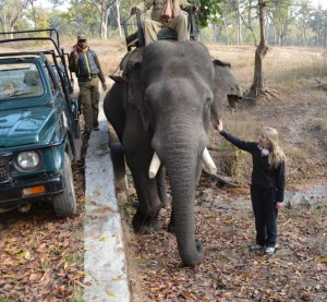 Bandhavgarh Elephant Ride